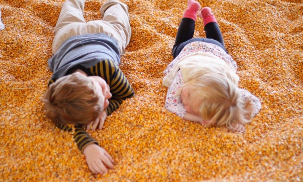 Kids at the pumpkin patch