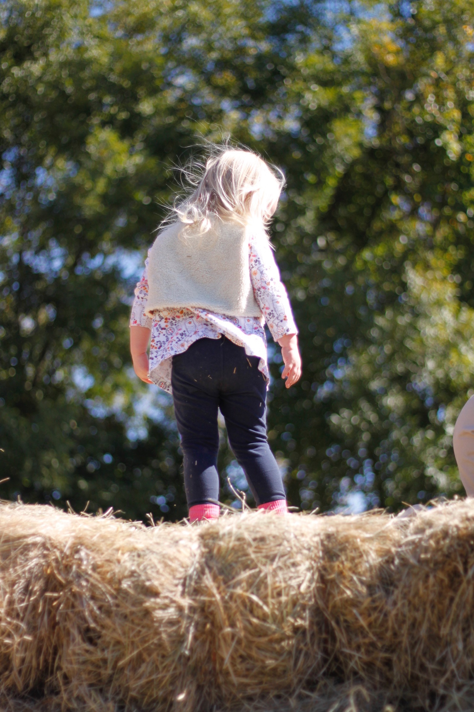 little L at pumpkin patch